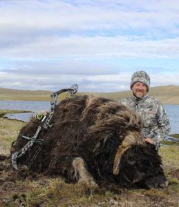 Jason Stafford Musk Ox 2017